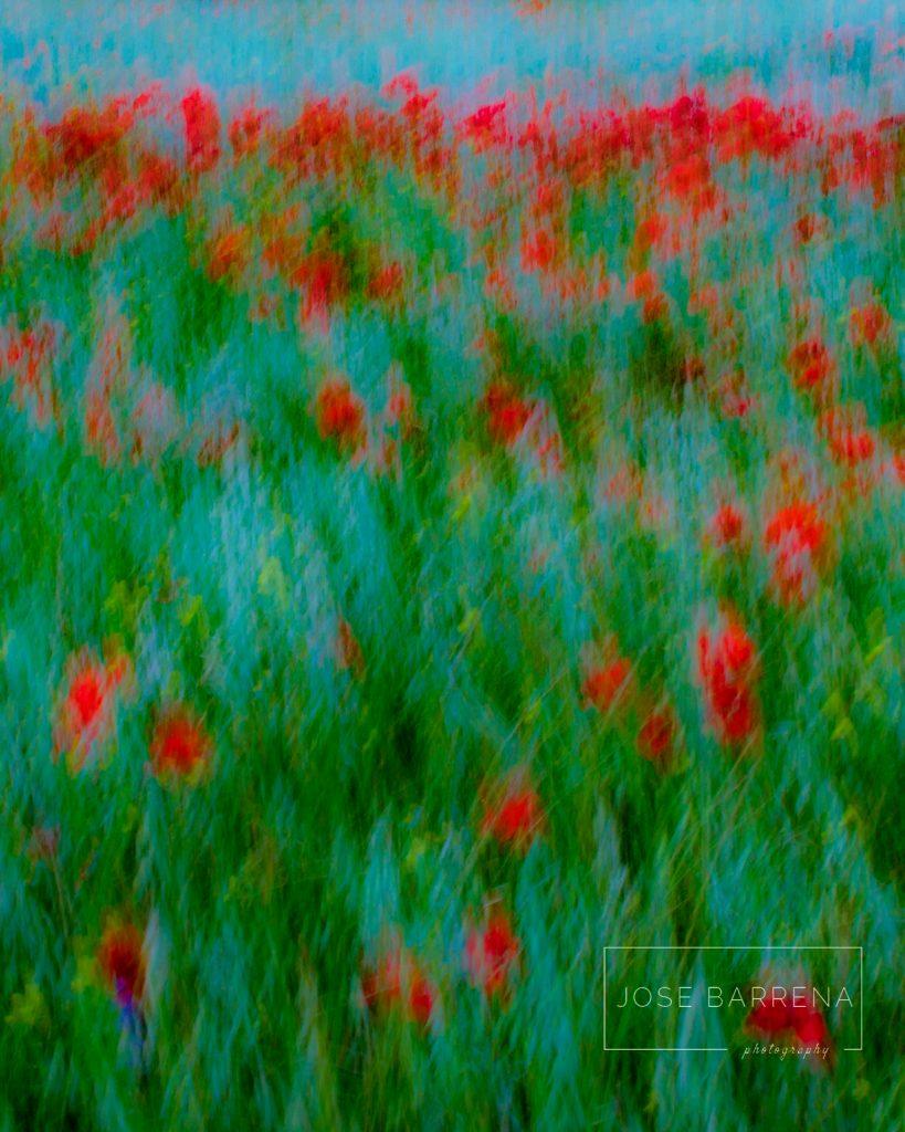 jose-barrena-diffusso-01