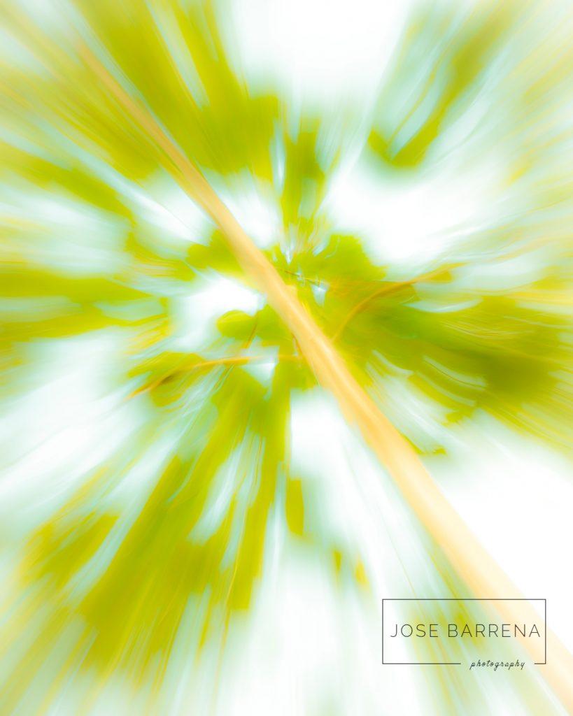 jose-barrena-diffusso-04