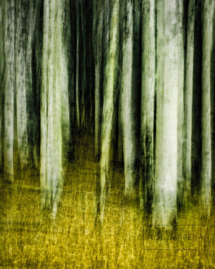 jose-barrena-diffusso-17