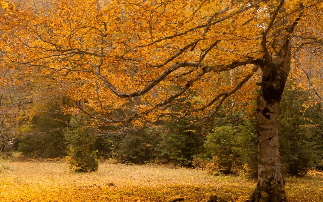 Qué fotografiar en otoño